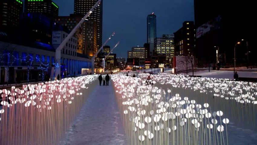 28000个白色水晶茎的灯光秀展览活动,反思人类与自然环境的关系