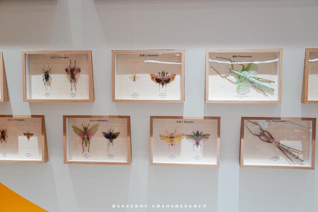「随虫去野」沉浸式昆虫展览活动带你上一堂有趣的自然科普课